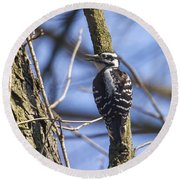 Hairy Woodpecker - Female Round Beach Towel