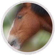 Handsome Bay Shire Horse Round Beach Towel