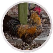 Handsome Rooster Round Beach Towel