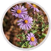 Happy Asters Round Beach Towel
