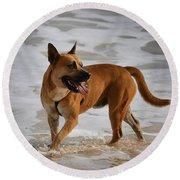 Happy Dogs 5 Round Beach Towel