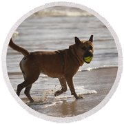 Happy Dogs 7 Round Beach Towel