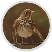 Happy Hermit Thrush Round Beach Towel