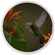 Happy Little Hummingbird  Round Beach Towel
