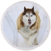 Happy Husky Round Beach Towel