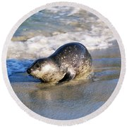Harbor Seal Round Beach Towel