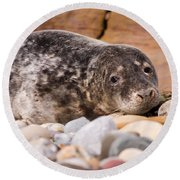 Harbour Seal Close Up Round Beach Towel