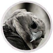 Harpy Eagle Closeup Round Beach Towel