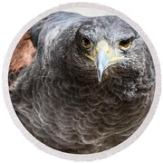 Harris Hawk Ready For Attack Round Beach Towel