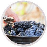 Harvest At Vineyard In Santa Cruz Round Beach Towel