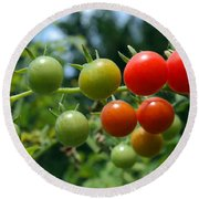 Harvest Tomatoes Round Beach Towel