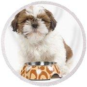 Havanese With Dog Bowl Round Beach Towel