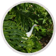 Hawaiian Garden Visitor - A Bright White Egret In The Lush Greenery Round Beach Towel