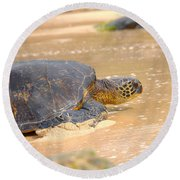 Hawaiian Green Sea Turtle 2 Round Beach Towel