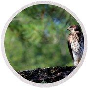 Hawk In Tree Round Beach Towel