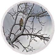 Hawk In Winter Round Beach Towel