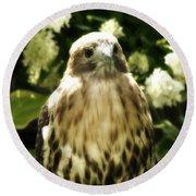 Hawk Portrait Round Beach Towel