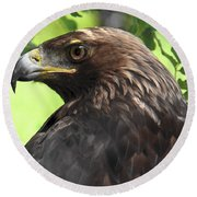 Hawk Scouting Round Beach Towel