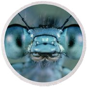 Head And Compound Eyes Of Damselfly Round Beach Towel