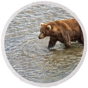 Head Grizzly Bear With Intense Fishing  Focus For Salmon In Moraine River In Katmai Np-ak Round Beach Towel