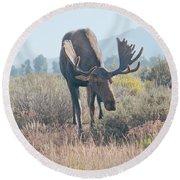 Head Lowered Bull Moose Round Beach Towel