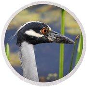 head shot - Yellow crowned Night Heron Round Beach Towel