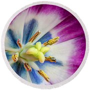 Heart Of A Tulip - Square Round Beach Towel