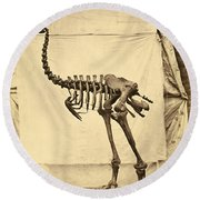 Heavy Footed Moa Skeleton Round Beach Towel