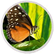 Hecale Longwing Butterfly Round Beach Towel