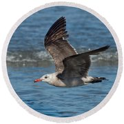 Heermanns Gull Round Beach Towel