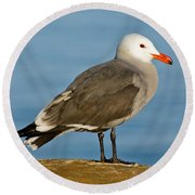 Heermanns Gull On Rock Round Beach Towel