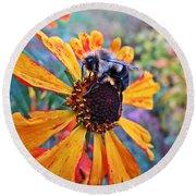 Helenium Bumble Bee Round Beach Towel