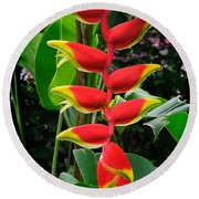 Heliconia Rostrata 2 - A Blooming Heliconia Rostrata Flower Round Beach Towel