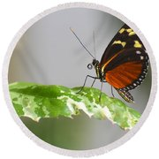 Heliconius Butterfly On Green Leaf Round Beach Towel