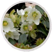 Hellebore And Friends Round Beach Towel