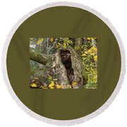 Hello Is There Anybody Out There? Round Beach Towel