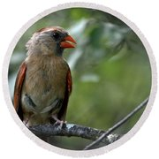 Hello Young Cardinal Round Beach Towel