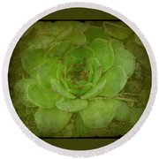 Hen And Chicks Plant Round Beach Towel