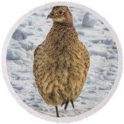 Hen Pheasant In The Snow Round Beach Towel
