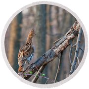 Hen Ruffed Grouse On Roost Round Beach Towel