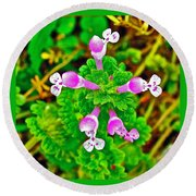 Henbit At Chickasaw Village Site At Mile 262 Of Natchez Trace Parkway-mississippi Round Beach Towel