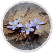 Hepatica Wildflowers - Hepatica Nobilis Round Beach Towel