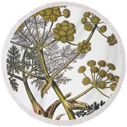 Herbal: Fennel, 1819 Round Beach Towel