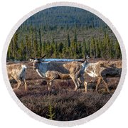 Herd Of Broad Pass Round Beach Towel