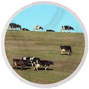 Herd Of Cows Grazing On A Hill, Point Round Beach Towel
