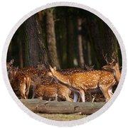 Herd Of Deer In A Dark Forest Round Beach Towel