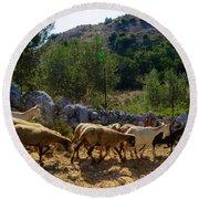 Herd Of Sheep In Tuscany Round Beach Towel