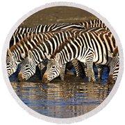 Herd Of Zebras Drinking Water Round Beach Towel