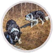 Herder And Herded Round Beach Towel