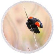 Here I Am Ladies - Red-winged Blackbird Round Beach Towel